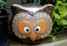 Bewildered owl