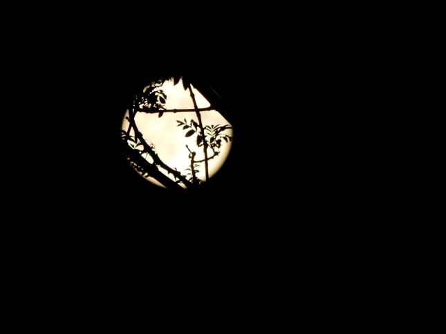 Blue Moon 31.7.2015