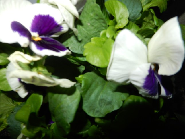 Purple, white and green