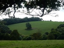We liked this field and its tree