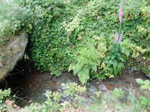 The stream at Gwennap