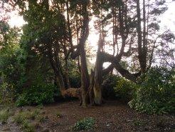 Beautiful tree trunk
