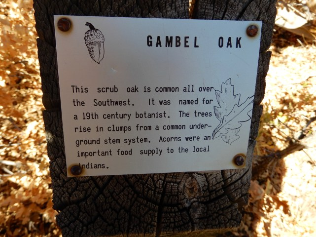 Gamble Oak