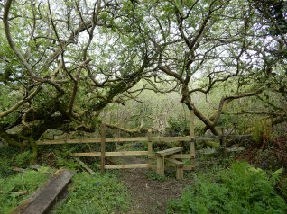 Another stile