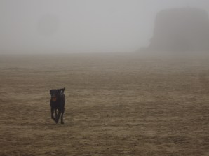 The dog emerging from the mists
