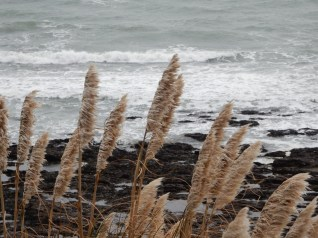 Wind driven grasses and seas