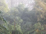 Jungly mists looking down to the river