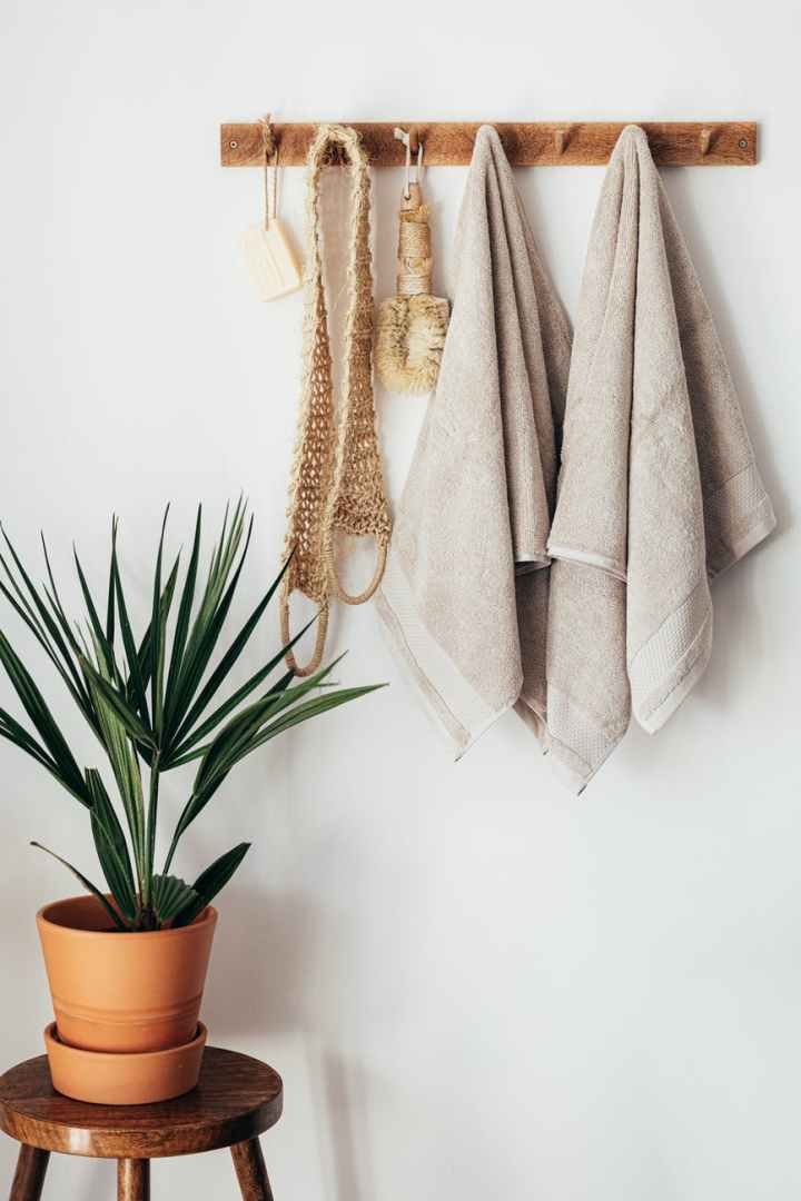 green potted plant in minimalistic bathroom with body care tools