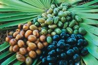 BreastUltimate main ingredient - Saw Palmetto