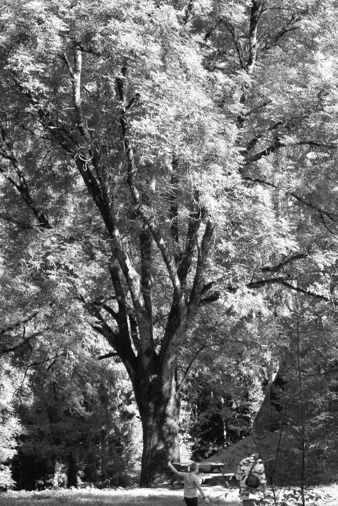 N&B tree