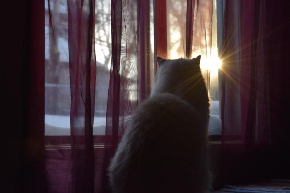 Gandalf morning sun