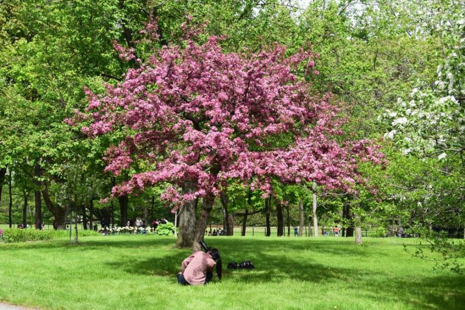 Photography of the blossom