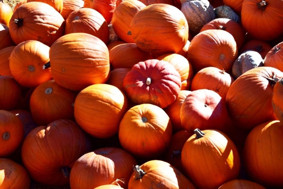 Plaisirs d'automne