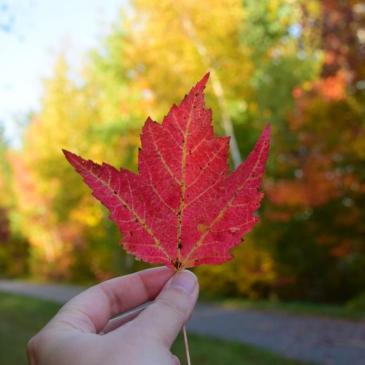 La saison des couleurs au Québec