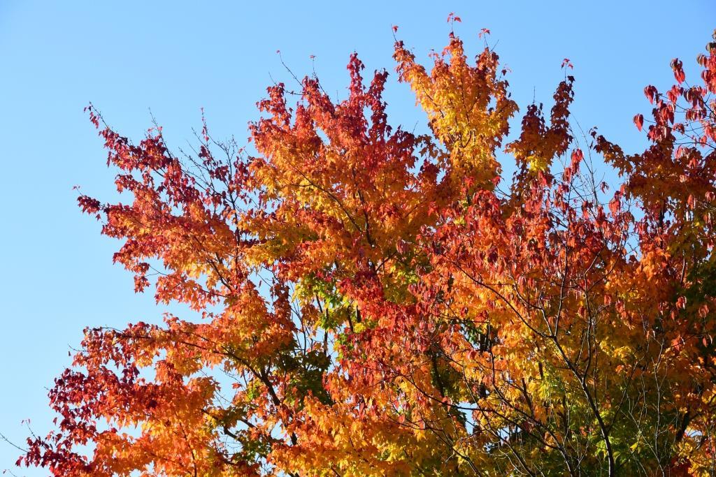 Québec saison des couleurs