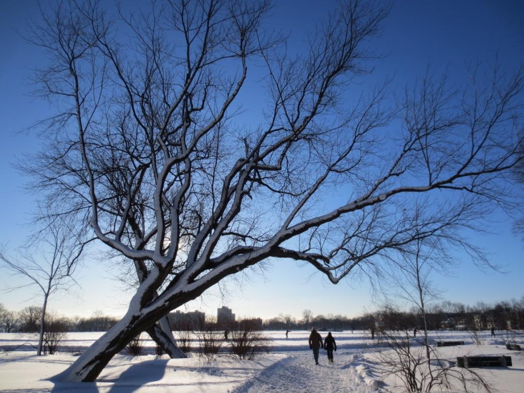 L'hiver, ses joies et ses cauchemars   #DDLMBQ