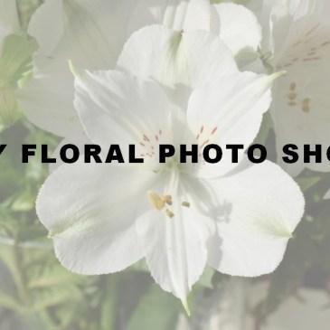 My Floral Photo Shop – Août 2019