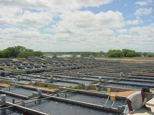 Baterias de Raceways de Produção Super-Intensiva de Tilápia em Paulo Afonso Bahia Brasil