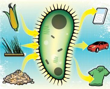 Bioplasticos-Source