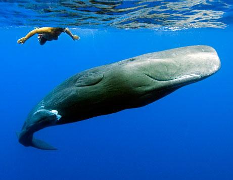 Baleias - Evolução ou Design Inteligente?
