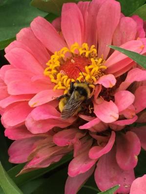 Save the Bees - Winnipeg Manitoba Canada
