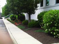 Big C Lawn and Landscaping - Commercial Landscaping, Mulch & Spring Cleanup, 2014 - 18