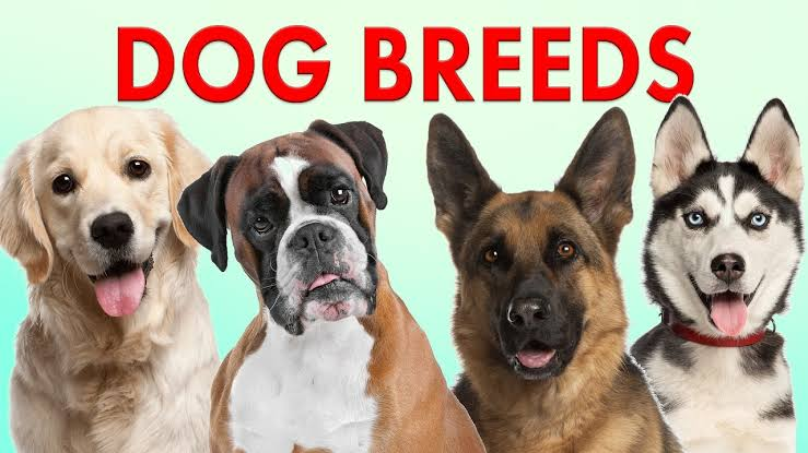 Dog breeding business