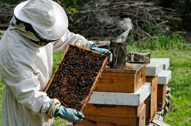 Honey Bee Farming
