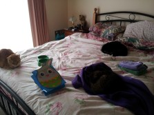 All three cats (Dinah is on the dressing gown)