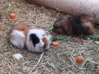 Meet Gizmo and Dexter