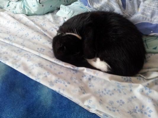 Sleepy Salem