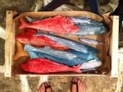 Ceramic fishes at melani soupias shop