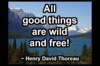 All good things are wild and free! ~ Henry David Thoreau