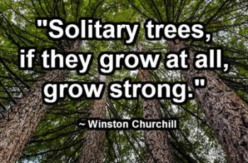 """Solitary trees, if they grow at all, grow strong."" ~ Winston Churchill"