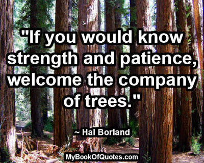 """If you would know strength and patience, welcome the company of trees."" ~ Hal Borland"