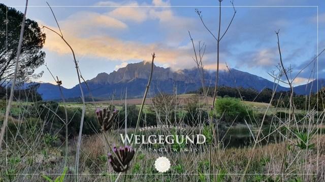 Celebrate #DrinkChenin Day With Welgegund Heritage Wines 2019 Chenin Blanc