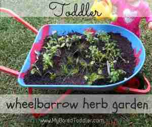 gardening with kids wheelbarrow herb garden