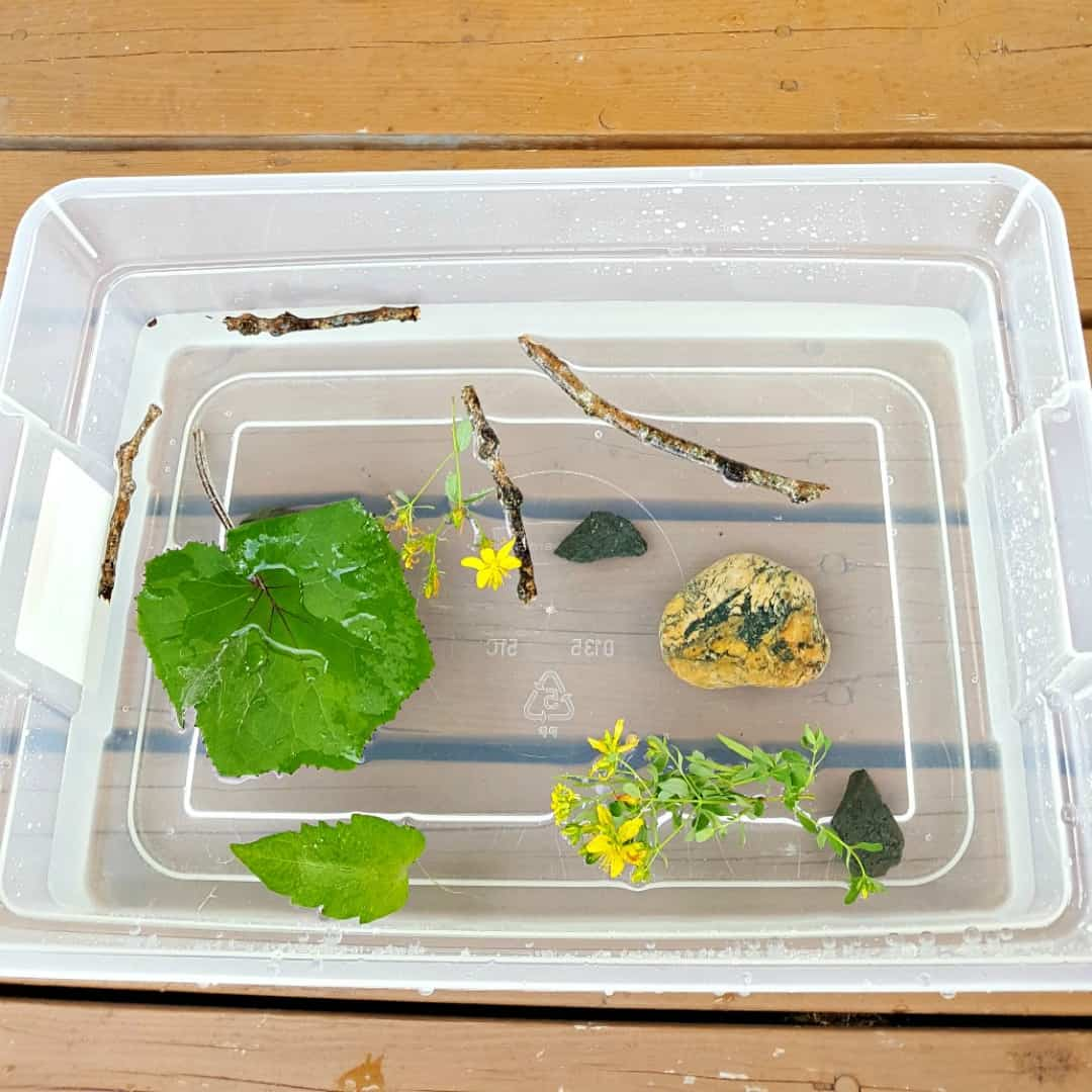 Sink And Float Water Play With Natural Materials