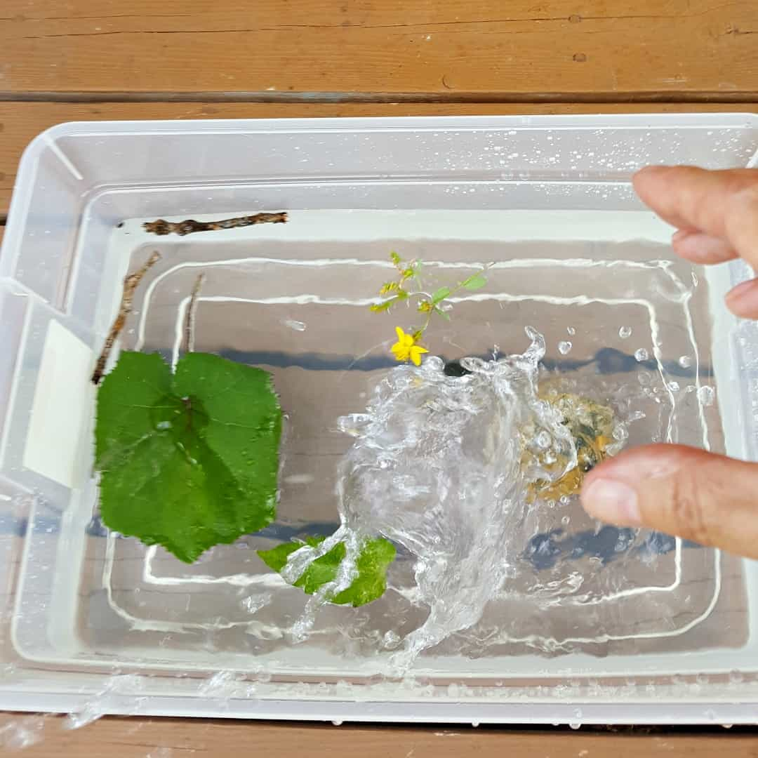 Splashing with rocks, twigs and leaves in summer themed water play