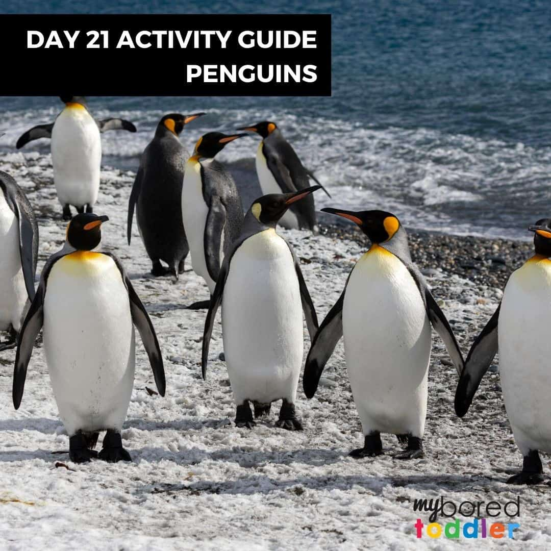DAY 21 HOMESCHOOL TODDLER PENGUINS