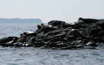 seals on rocks near Ketchikan