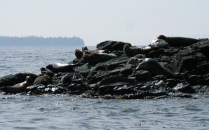 seals on rocks near Ketchikan