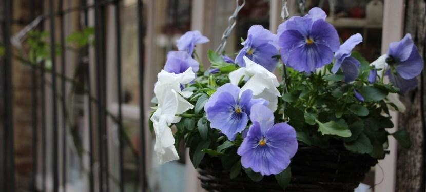 8 godzin w Cirencester