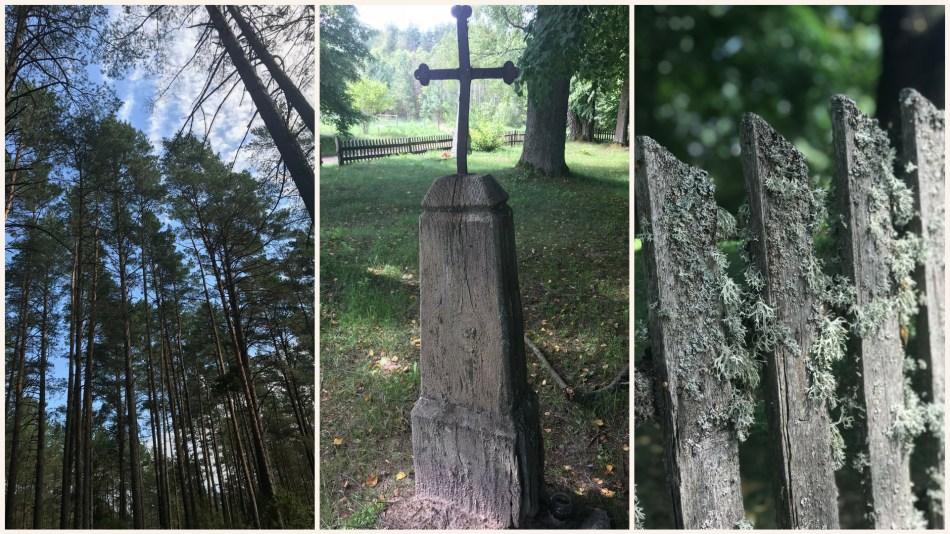 wakacje na Litwie- lasy Litwy