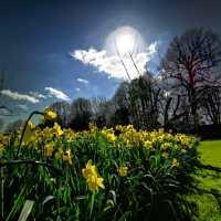 Wiosna w Hampshire - najpiękniejsze miejsca