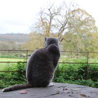 Lacock jesienią - urokliwa wioska w Cotswolds