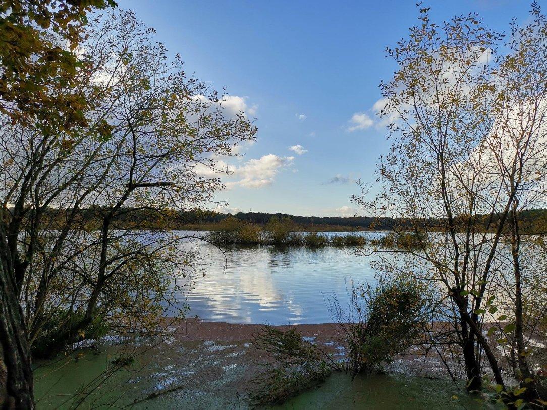 Delemare Forest i Black Lake