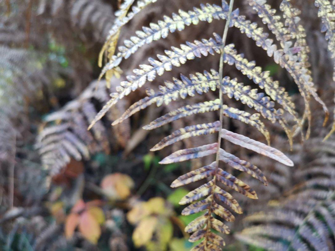Jesień w Delamere Forest