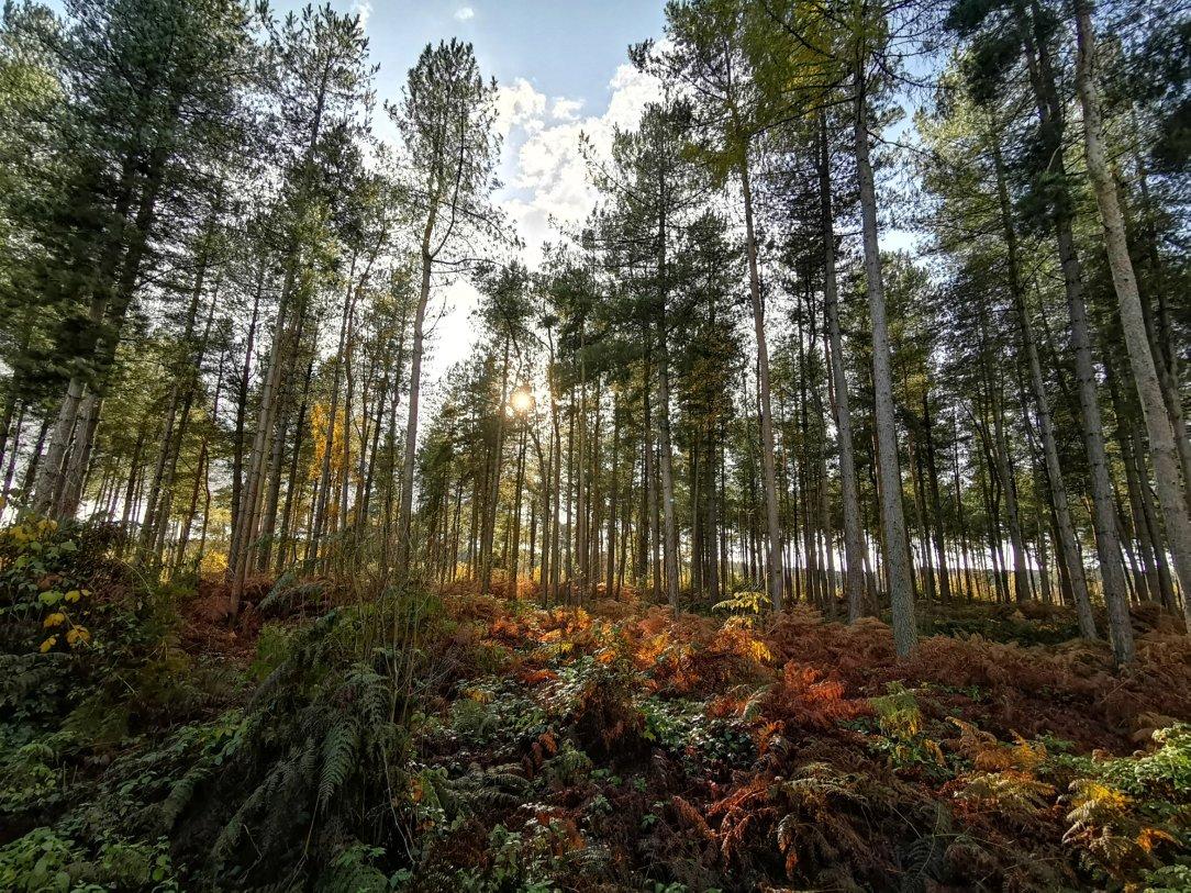 Bajkowy las Delamere Forest