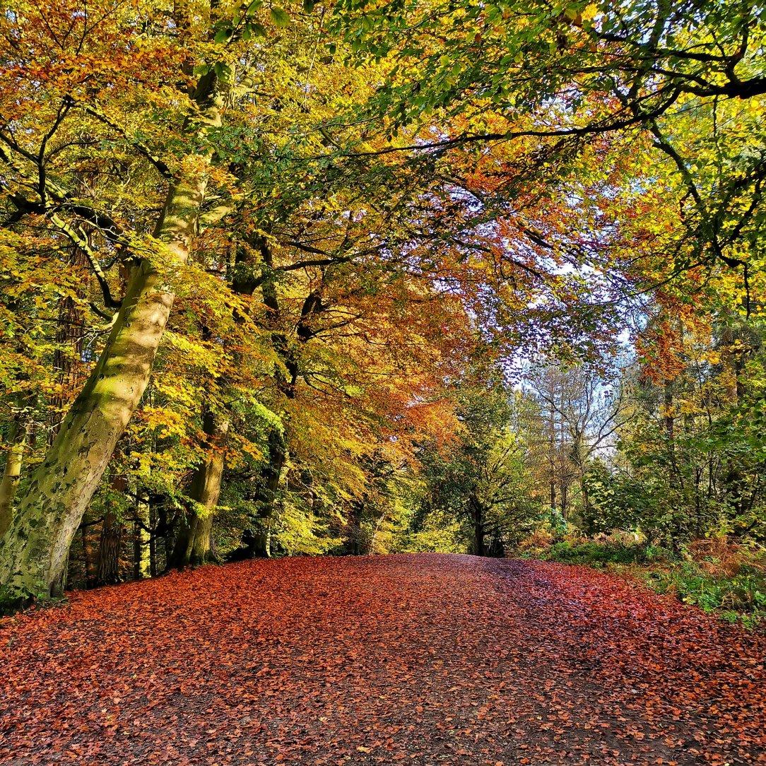 Idź na spacer do lasu - Delamere Forest